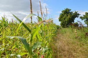 Landwirtschaft in der Zülpicher Börde